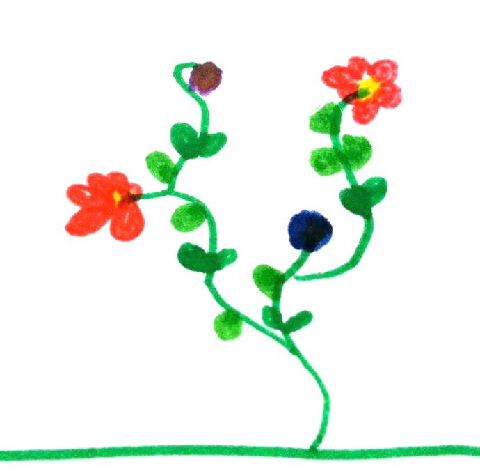 fiori Lisa
